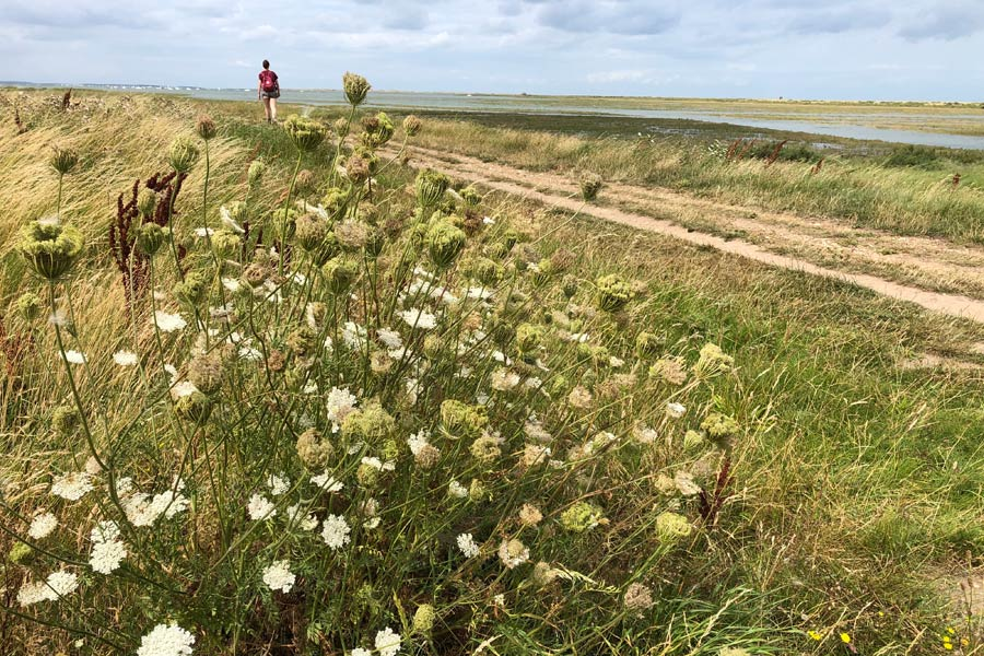 Tidal marshes at Blakeney in North Norfolk - on the England Coast Path