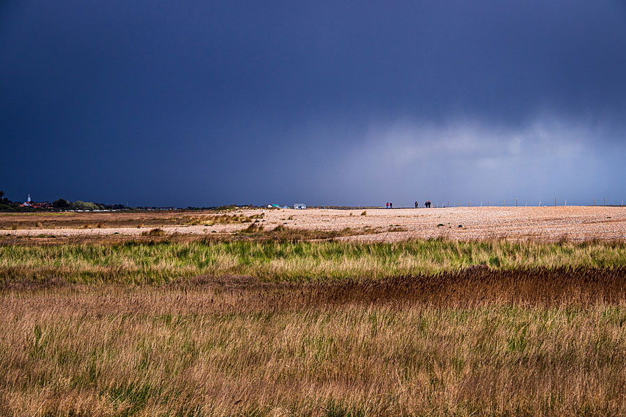Minsmere RSPB nature reserve, Suffolk - on the England Coast Path