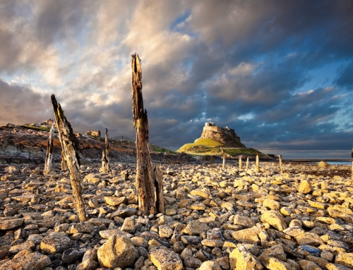 Northumberland Coast: Budle Bay to Craster